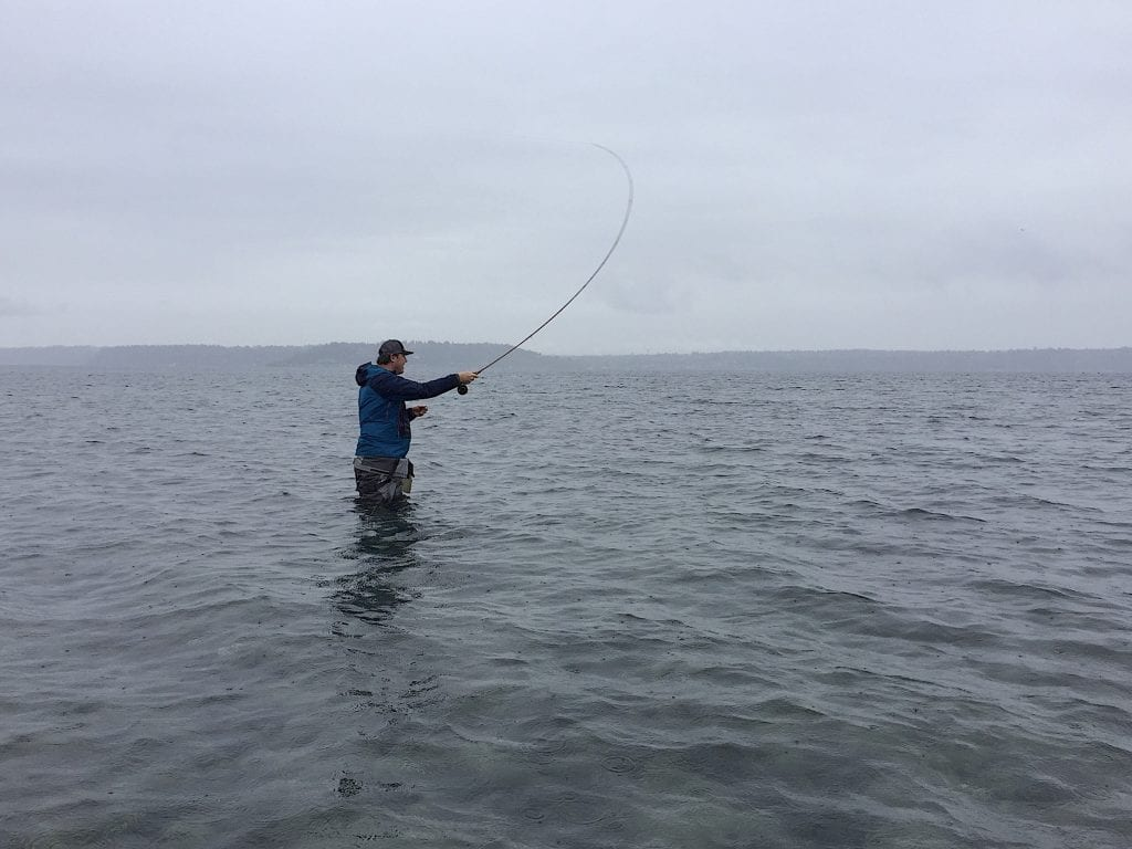 coastal cutthroat in salt water