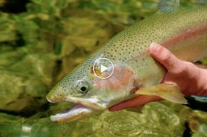 fly fishing new zealand on a budget