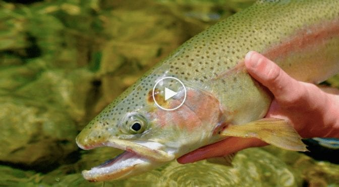 Fly Fishing New Zealand on a Budget – Trailer