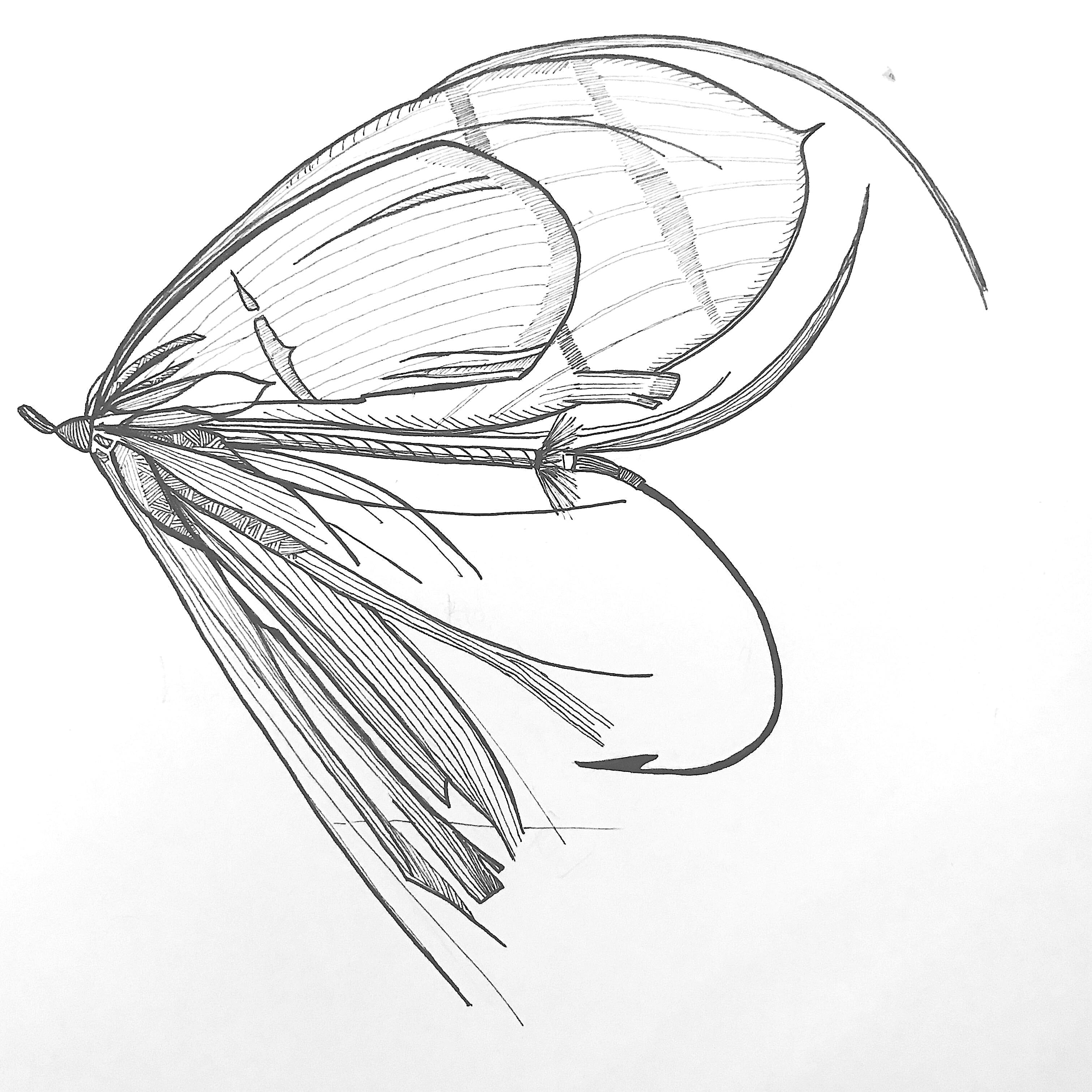 Emma Yardley Fly Drawings I