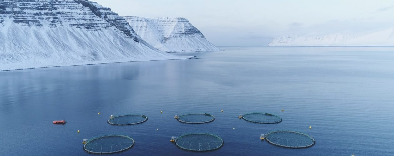 uncontained aquaculture Iceland