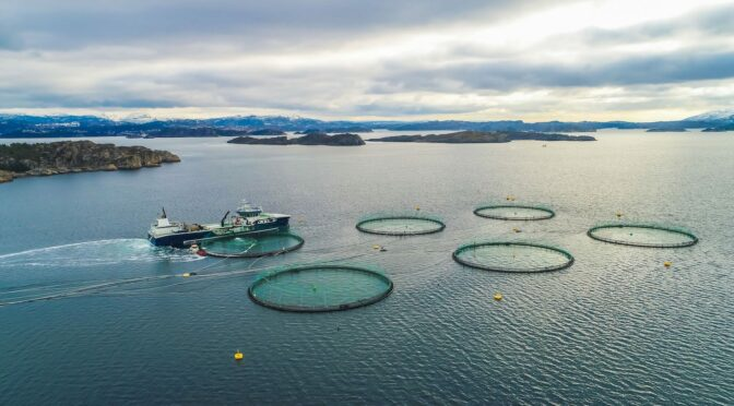 Uncontained Aquaculture Threatens Iceland