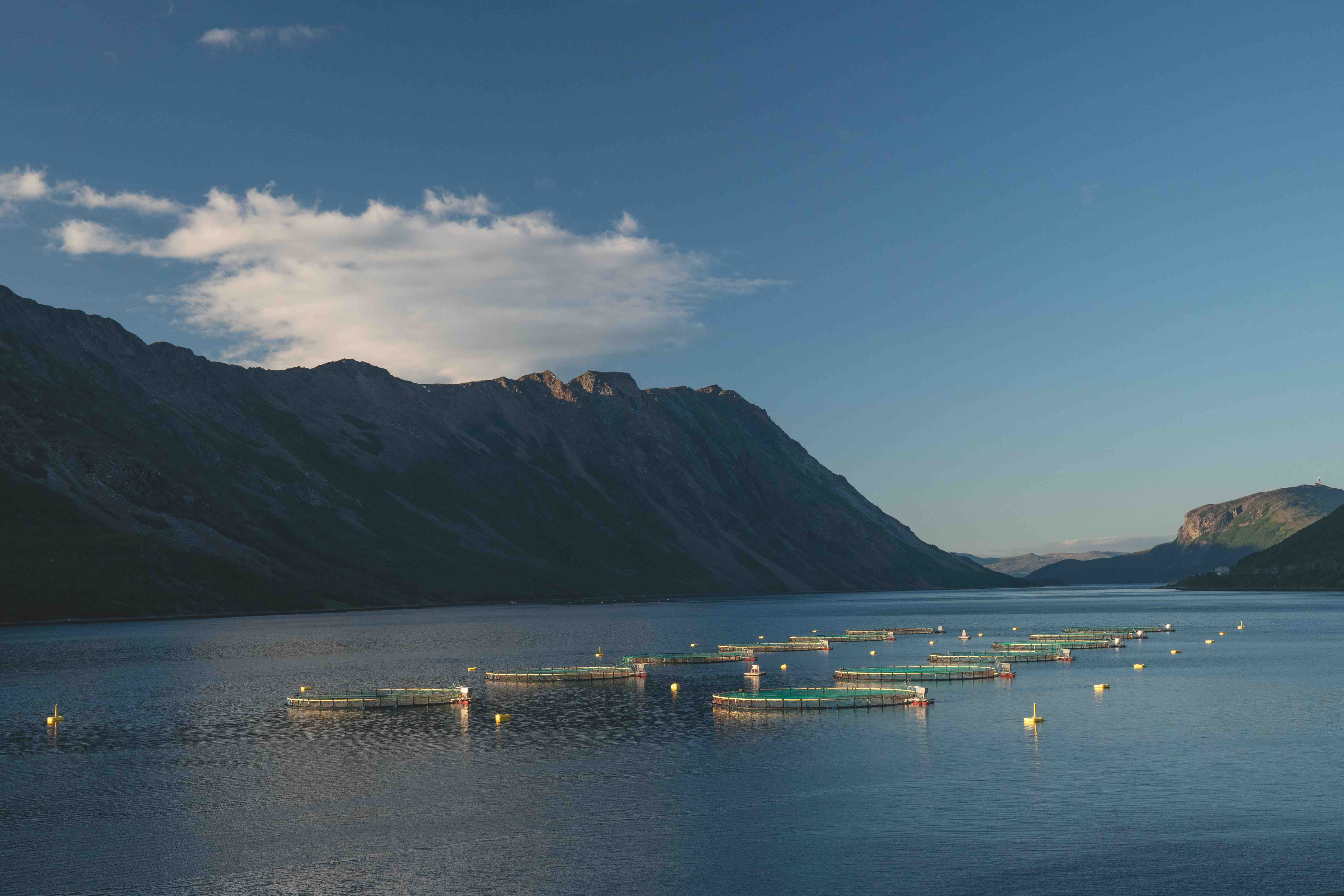 Artifishal Fish Farms in Fjord