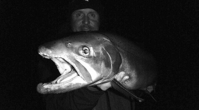 Big Trout at Night – Vampire Hours
