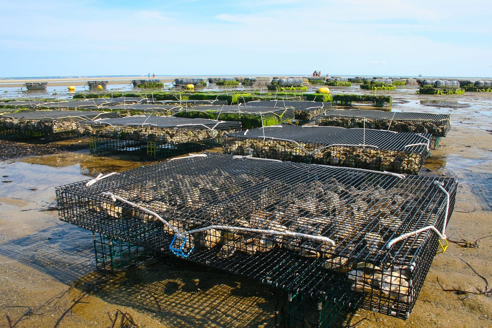 oyster farm sustainable aquaculture