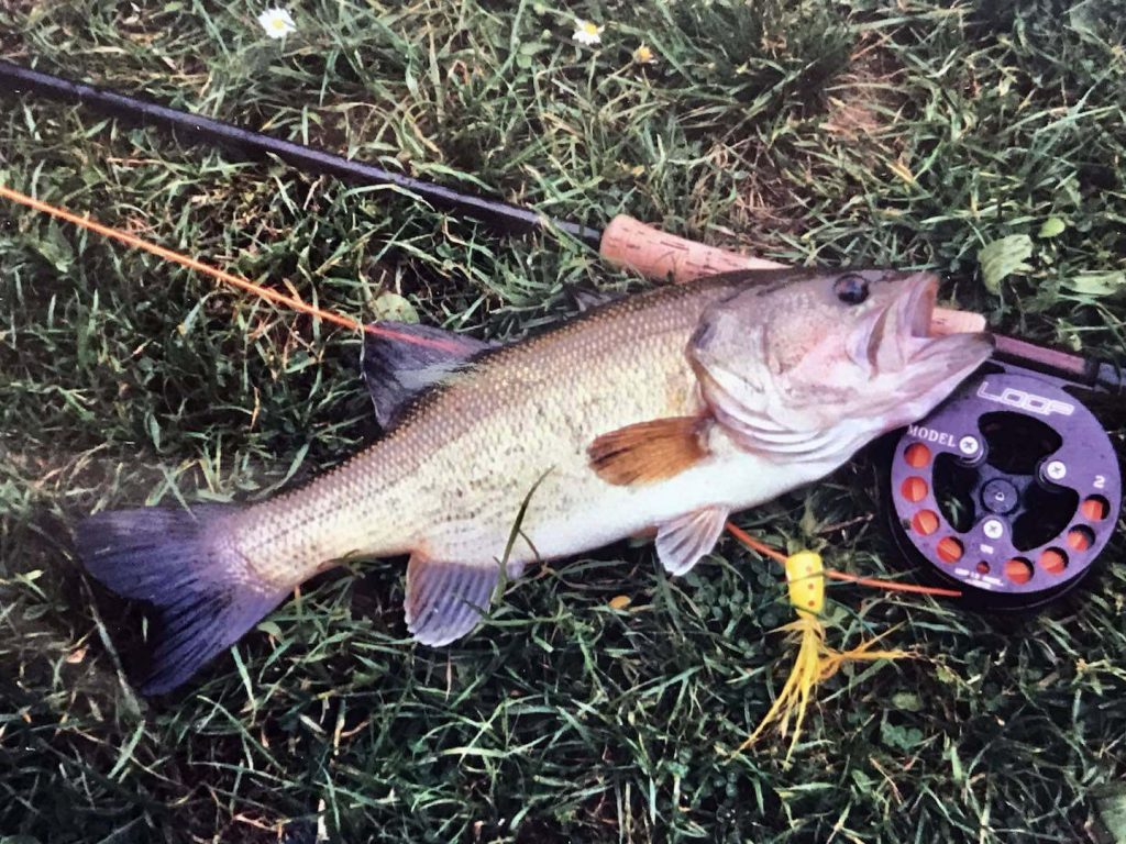 Fly fishing bass