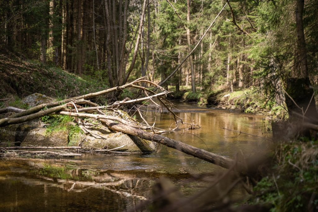 Fly Fishing Small Streams - Driftwood