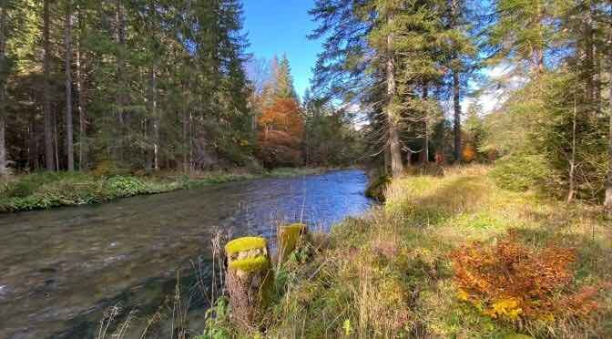 Fly Fishing Austria: Autumn at the Loisach