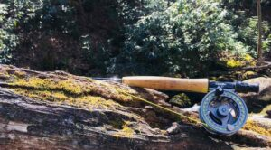 Fly rod and reel on a tree