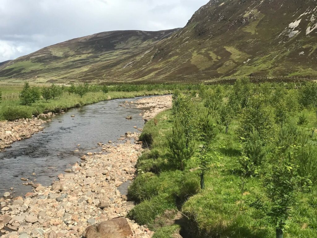 Newly planted trees on small stream