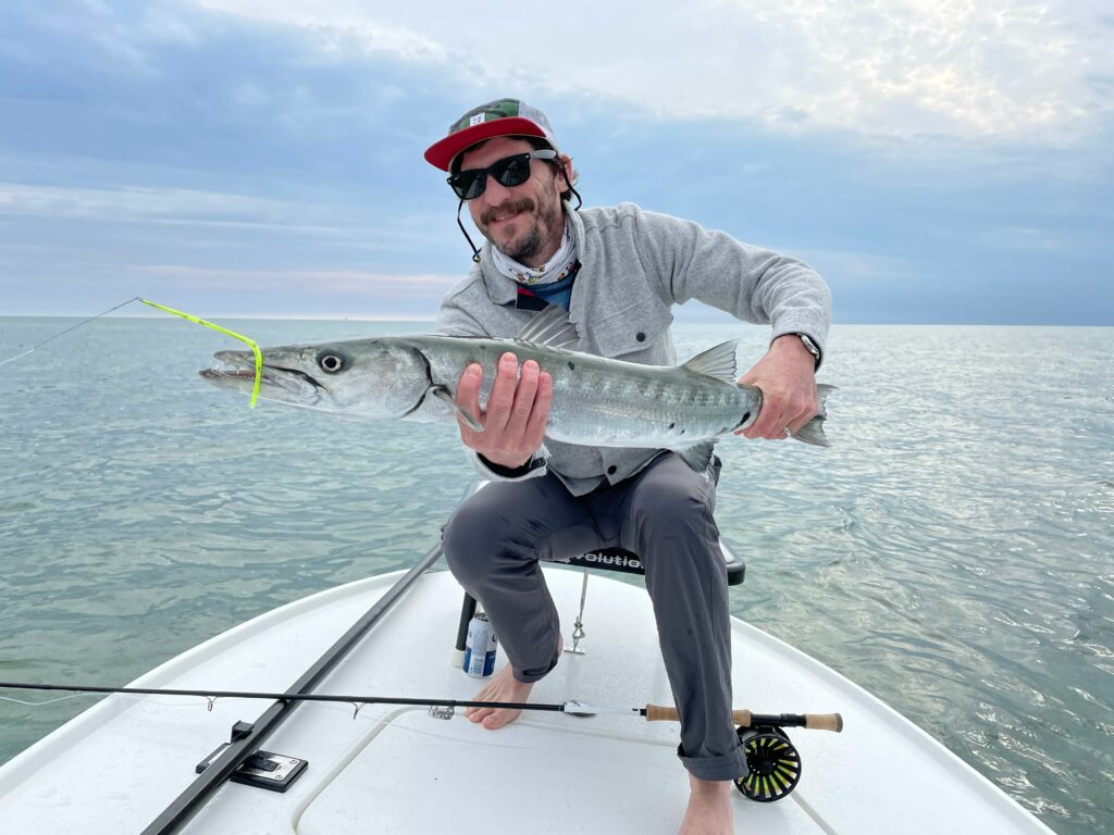 Barracuda caught on the fly