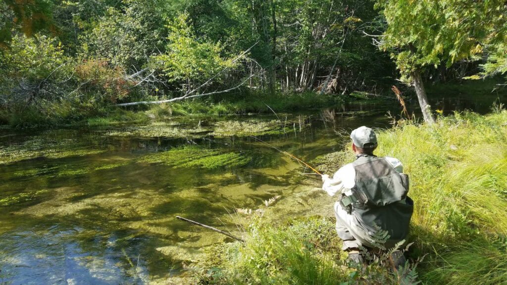 Casting for the impossible trout in the Nick Adam's Preserve