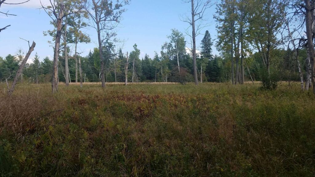 Woods and Meadow near Black River in Ernest Hemingway Fishing Country