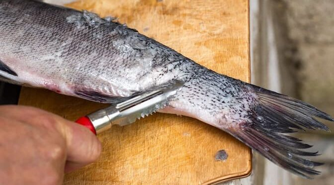 Best Fish Scaler to Prepare Your Catch – 2021 Buyer's Guide